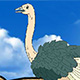 Super Ostrich Simulator